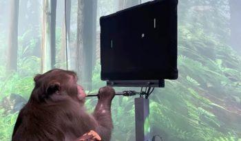 [Actu] Neuralink permet à un singe de jouer à un jeu vidéo avec son esprit