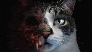 Incarnez un chat dans ce nouveau jeu d'horreur