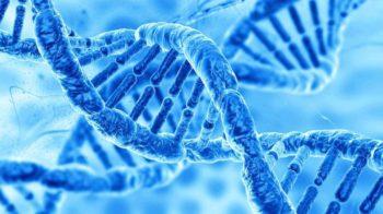 Une IA crée de l'ADN humain… artificiel